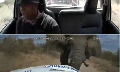Elephant vs bakkie limpopo